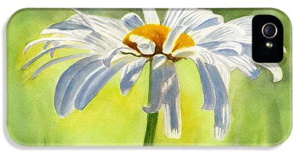 Single White Daisy Blossom IPhone 5 Case