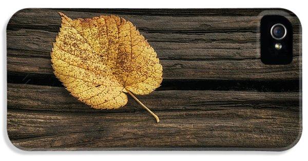 Single Yellow Birch Leaf IPhone 5 Case by Scott Norris