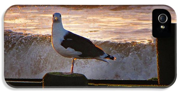 Sittin On The Dock Of The Bay IPhone 5 Case by David Dehner