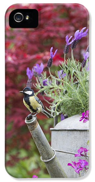 Titmouse iPhone 5 Case - Sitting Pretty by Tim Gainey