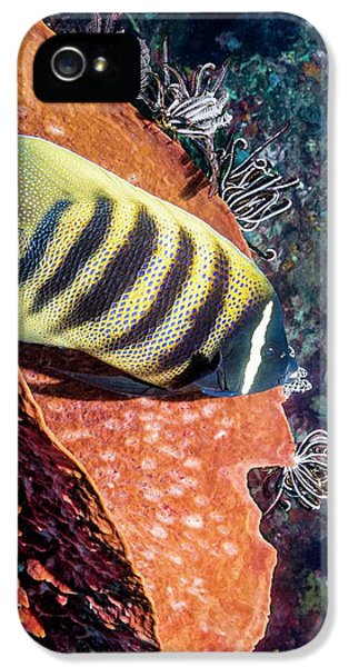 Sixbar Angelfish On A Reef IPhone 5 Case by Georgette Douwma