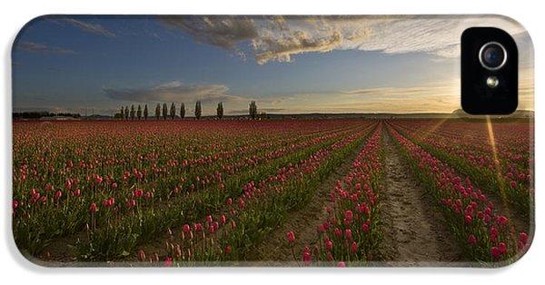 Skagit Tulip Fields Sunset IPhone 5 / 5s Case by Mike Reid