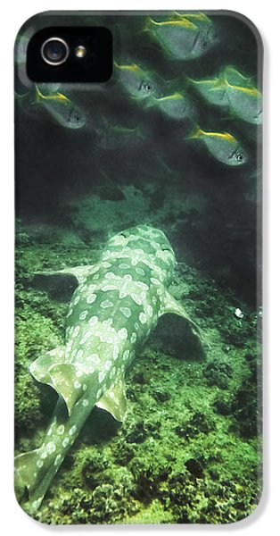 IPhone 5 Case featuring the photograph Sleeping Wobbegong And School Of Fish by Miroslava Jurcik