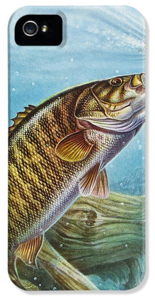 Bass iPhone 5 Case - Smallmouth Bass by JQ Licensing