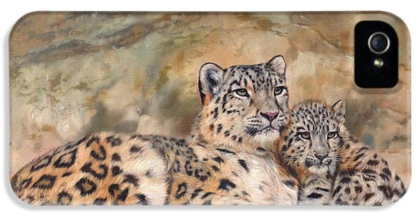 Snow Leopards IPhone 5 Case by David Stribbling