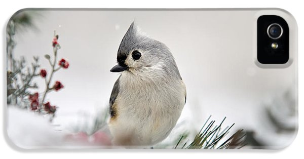 Snow White Tufted Titmouse IPhone 5 Case by Christina Rollo