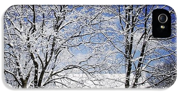 Sunny iPhone 5 Case - #snow #winter #house #home #trees #tree by Jill Battaglia