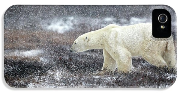 Bear iPhone 5 Case - Snowing Time by Alessandro Catta