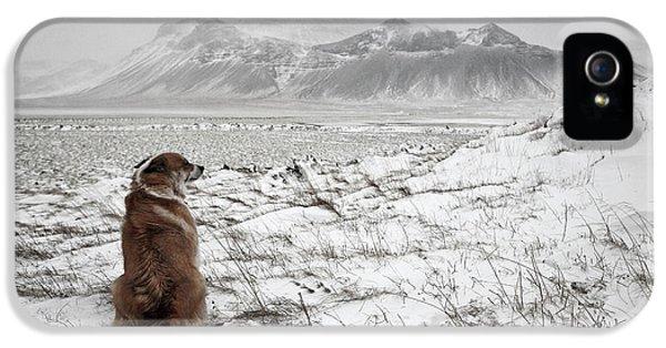 Snowstorm IPhone 5 Case by Bragi Ingibergsson -