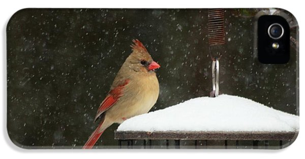Snowy Cardinal IPhone 5 Case by Benanne Stiens