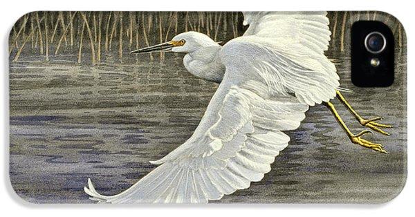 Snowy Egret IPhone 5 Case