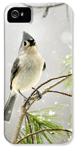 Snowy Songbird IPhone 5 Case by Christina Rollo