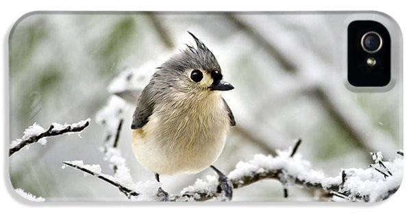 Snowy Tufted Titmouse IPhone 5 Case by Christina Rollo