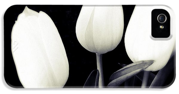 Soft And Bright White Tulips Black Background IPhone 5 Case