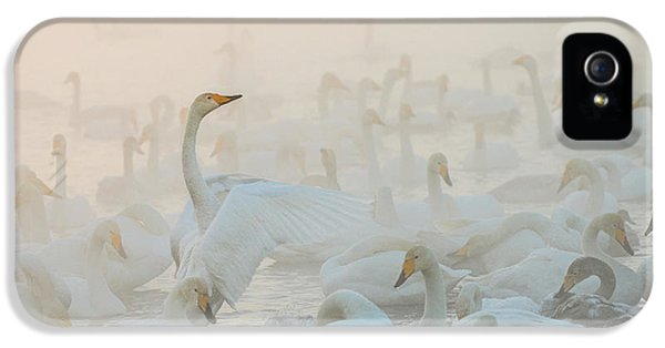 Swan iPhone 5 Case - Song Of The Morning Light by Dmitry Dubikovskiy
