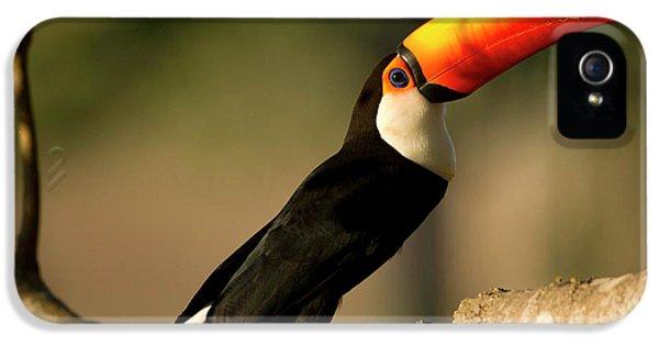 South America, Brazil, Pantanal, Mato IPhone 5 Case by Joe and Mary Ann Mcdonald