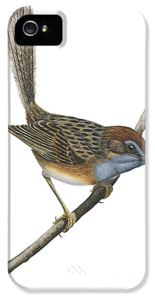 Southern Emu Wren IPhone 5 / 5s Case by Anonymous