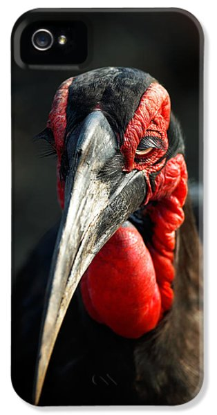 Southern Ground Hornbill Portrait Front View IPhone 5 / 5s Case by Johan Swanepoel