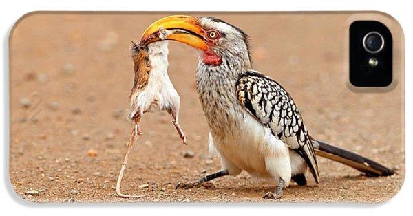 Hornbill iPhone 5 Case - Southern Yellow-billed Hornbill With Prey by Bildagentur-online/mcphoto-schaef