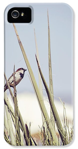 Sparrow On The Yucca IPhone 5 Case by Heather Applegate