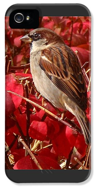 Sparrow IPhone 5 / 5s Case by Rona Black