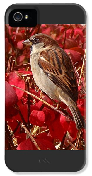 Sparrow IPhone 5 Case