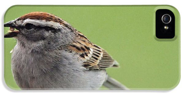 Sparrow Snack IPhone 5 Case by Dan Sproul