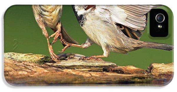Sparrows Fighting IPhone 5 Case by Bildagentur-online/mcphoto-schaef
