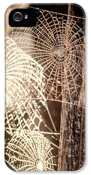 Spider Webs IPhone 5 Case by Anonymous