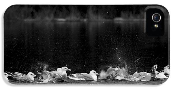 Splashing Seagulls IPhone 5 Case by Yulia Kazansky