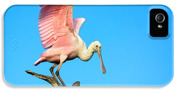 Spoonbill Flight IPhone 5 Case by Mark Andrew Thomas