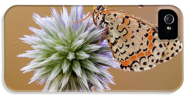 Spotted Fritillary IPhone 5 Case by Heath Mcdonald