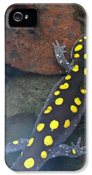 Spotted Salamander IPhone 5 / 5s Case by Christina Rollo