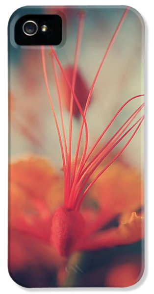 Stamens iPhone 5 Case - Spread The Love by Laurie Search
