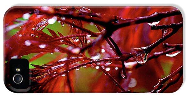 Spring Rain IPhone 5 Case
