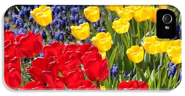 Spring Sunshine IPhone 5 Case