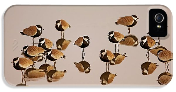 Spur-winged Lapwing (vanellus Spinosus) IPhone 5 Case by Photostock-israel