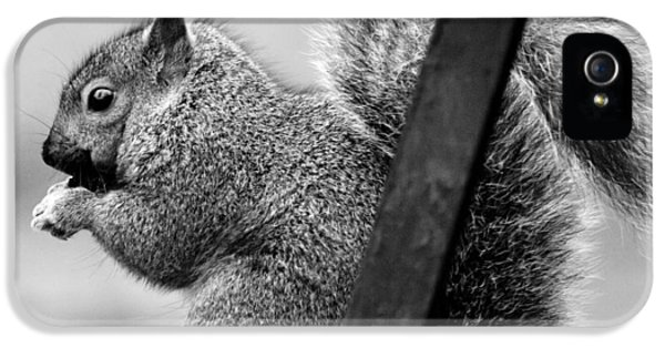 IPhone 5 Case featuring the photograph Squirrels by Ricky L Jones