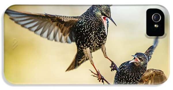 Starling Aerial Battle IPhone 5 Case by Izzy Standbridge