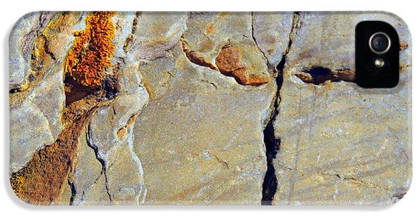 Stone Flower IPhone 5 Case by Marcia Lee Jones