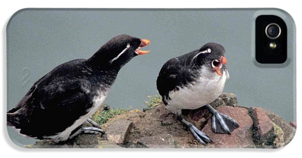 Auklets iPhone 5 Case - Stop Whining by F Hughes