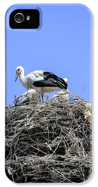 Storks Nesting IPhone 5 Case by Photostock-israel