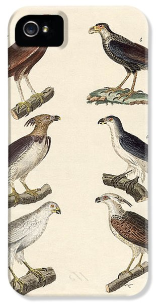 Harpy Eagle iPhone 5 Case - Strange Eagles by Splendid Art Prints