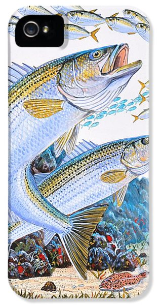 Striped Bass Rocks IPhone 5 Case by Carey Chen