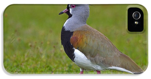 Strutting Lapwing IPhone 5 Case by Tony Beck