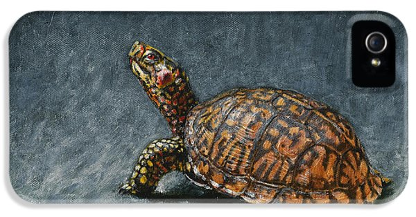 Turtle iPhone 5 Case - Study Of An Eastern Box Turtle by Dreyer Wildlife Print Collections