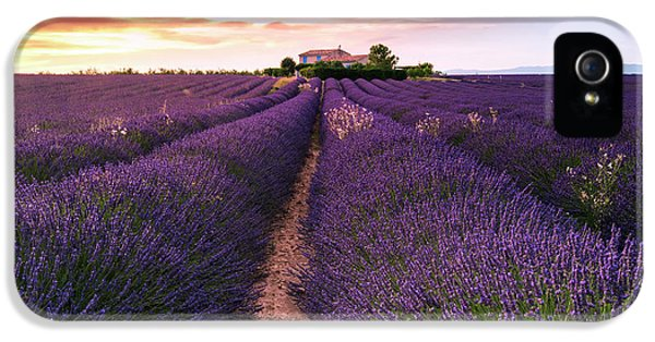 French iPhone 5 Case - Summer At Valensole by Richard Susanto