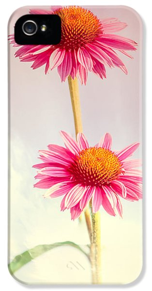 Summer Impressions Cone Flowers IPhone 5 Case