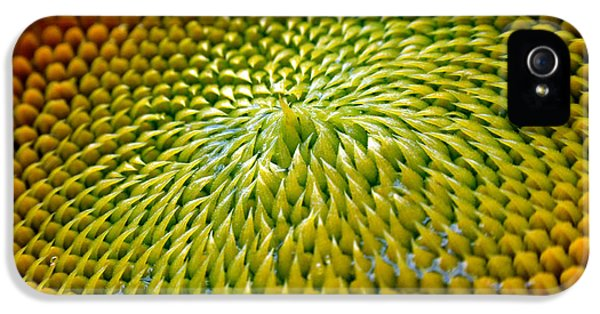 Sunflower iPhone 5 Case - Sunflower  by Christina Rollo