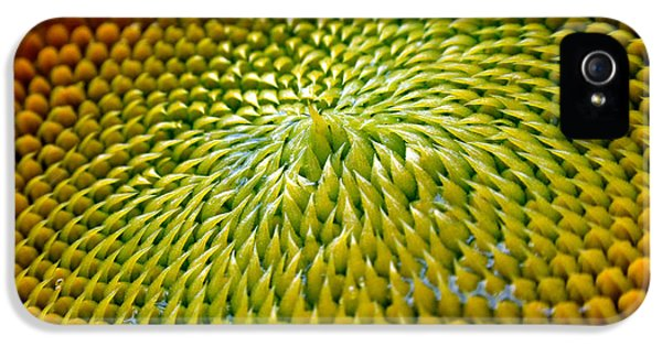 Sunflower  IPhone 5 Case by Christina Rollo